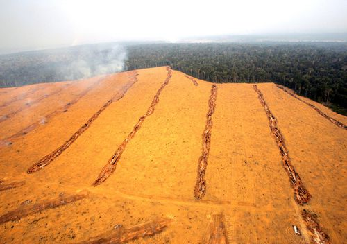 Large fields of soy near the city of Santarem in the Brazilian state of Para. Environmentalists say soybean farming has driven up the price of deforested land, encouraging cattle ranchers to sell their pastures and head deeper into the jungle, clearing forest and selling the wood to loggers. But Brazilian businessmen backing the soy expansion blame criticism on outside meddling.