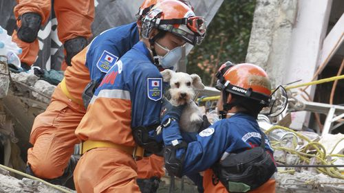 Japanese rescue workers reach the dog in a collapsed building where the search of victims continues, in Mexico City. (AAP)