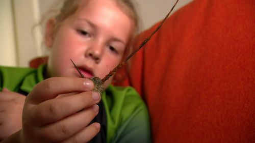 """Eight-year-old Abi Cook said it hurt """"10 out of 10"""" when she stepped on a rusty barb."""
