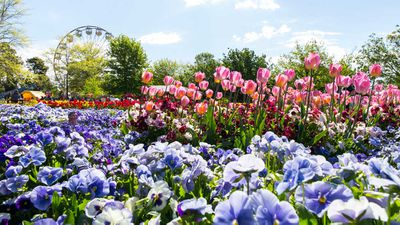 <strong>Spring arrives at Floriade with a full contingent of colours</strong>