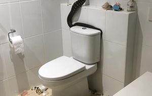 Carpet python trashes Gold Coast family's bathroom