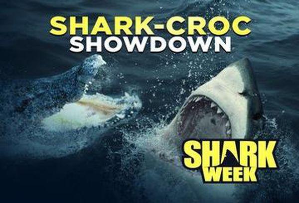 Shark-Croc Showdown