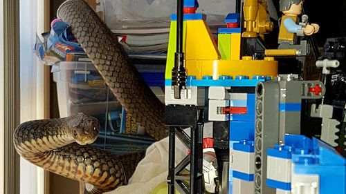 The 1.7m snake was nestled among toys inside a Gold Coast home. (Supplied)