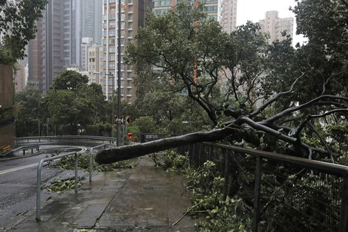 A tree is brought down in Hong Kong.