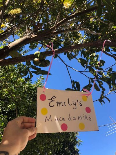 """Glenda Pontes, from Sydney's inner west, was inspired to make a special sign for her macadamia tree when she saw a family walk past with a little girl on her dad's shoulders. Her mum asked her: """"How are our macadamias going, Emily?"""" And her answer was, """"They are not ours!"""" """"I made this little sign so Emily knows she and her family are more than welcome to some macadamias,"""" Ms Pontes said."""
