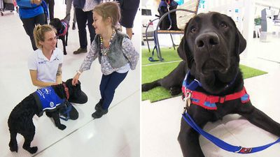 Airport assistant dogs help travellers em-bark with a smile