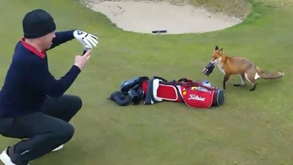Sly fox steals golfer's wallet