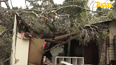 The large tree crashed through the boy's bedroom.