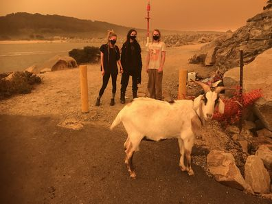 Emerald Adams, Katarzyna Krilov and Lachlan Reilly are seen with their goat Hansel in Narooma, NSW, Saturday, January 4, 2020. They have evacuated Central Tilba because of the fire danger forecast on Saturday. (AAP Image/Dominica Sanda)