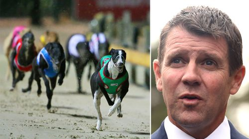 'Win for animals': Greyhound racing ban bill passes in NSW upper house