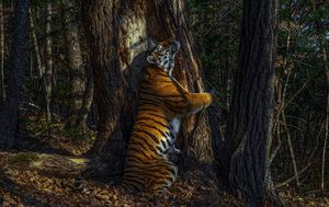 Rarest creatures on Earth captured by Wildlife Photographers of the Year