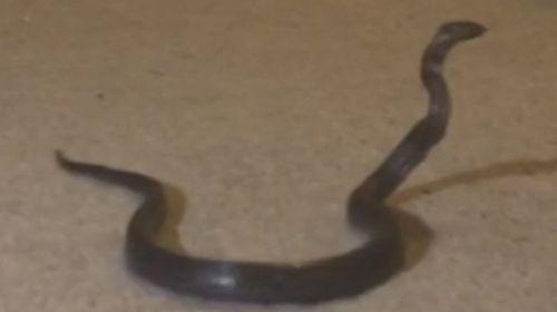 Sydney mum found a snake in her child's bedroom.