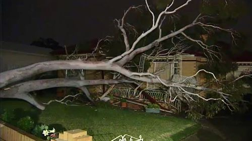 Trees were uprooted across Melbourne as wild winds hit the city, including one in the front yard of a home in St. Albans. (9News)