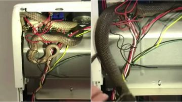 A woman was startled when a metre-long snake crawled past her and into the oven.