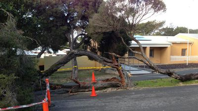 Trees were brought down on Rottnest Island. (Rottnest Police)