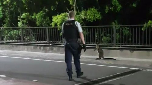 The wallaby was spotted on the bridge just before 5am. (NSW Police)