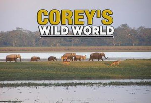 Corey's Wild World