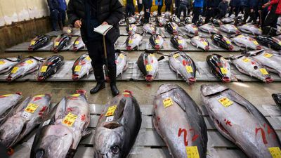 Bluefin tuna breaks record at Tsukiji fish market