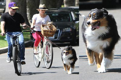 Hilary and her hockey-playing hubby, Mike Comrie, prefer to bike rather than walk their dog! Only this pooch doesn't belong to Hils - apparently the couple were babysitting her mum's dog.