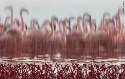 The Upside-Down Flamingos by Paul Mckenzie