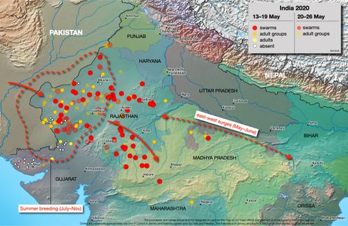 The Food and Agricultural Organisation predicts locusts will reach as far as Nepal and Bangladesh.