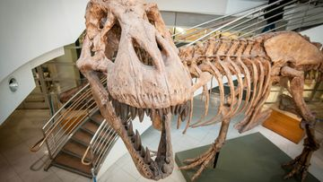 A team of experts say that billions of T. rex roamed North America