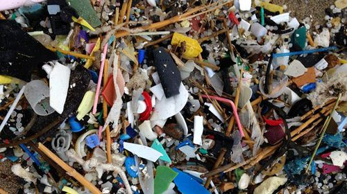 A collection of various Lego pieces among debris from the sea. (Facebook)