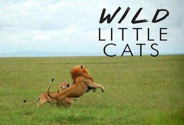 Wild Little Cats