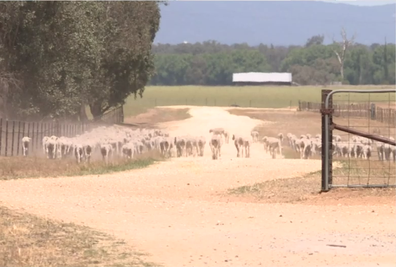 NSW and Queensland are being affected by the worst drought in over a century.