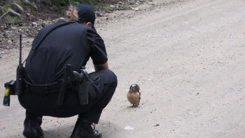 What a hoot: US deputies stop for a chat with a baby owl