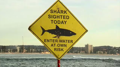 A man has been injured after a suspected shark attack on Shelly Beach in Manly this morning.