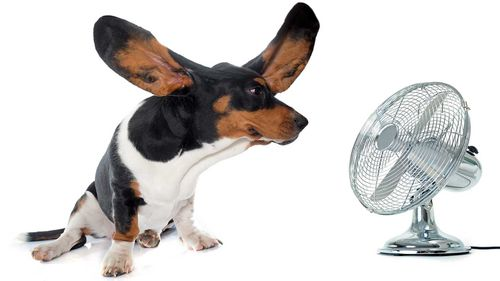 Opting for a fan can save you money this summer.