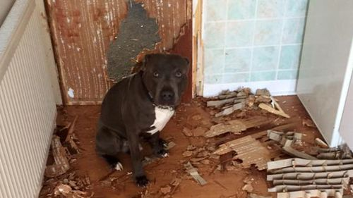 Scottish pet owner returns dog after arriving home to find huge hole punched through kitchen door