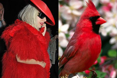 When you dress like a red bird, you look like a red bird. <p><b>Image</b>: Getty