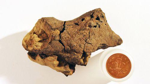 Aussie scientists help identify fossilised dinosaur brain tissue