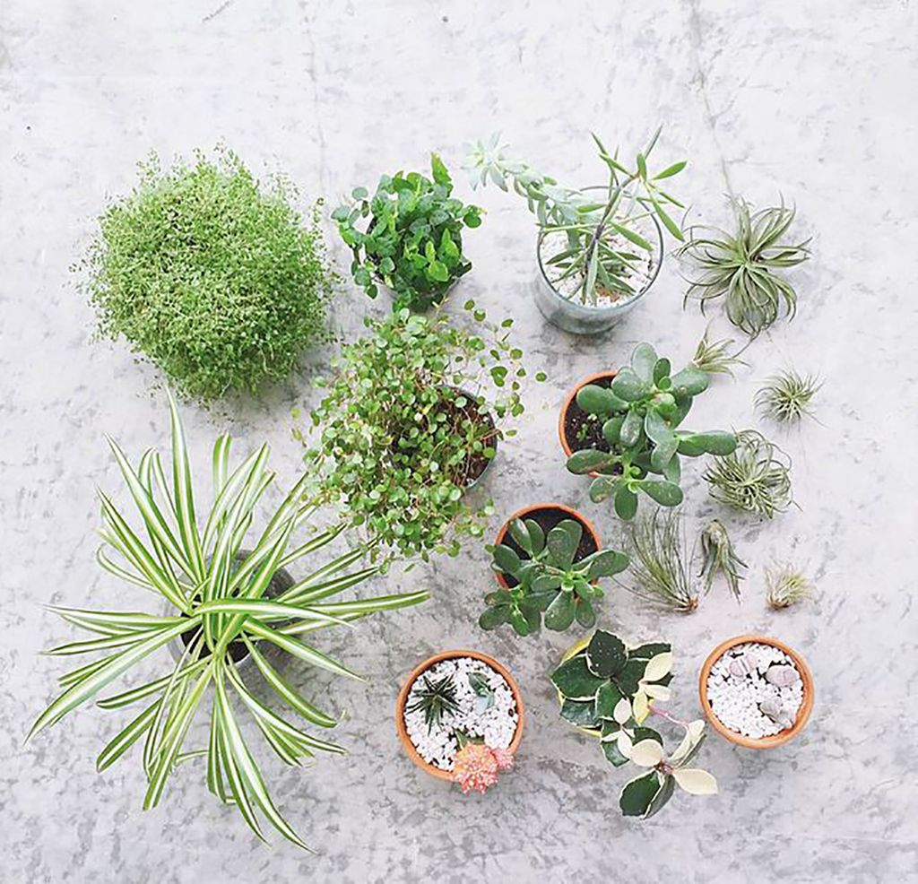 The perfect greenery additions for your coffee table geotapseo Gallery