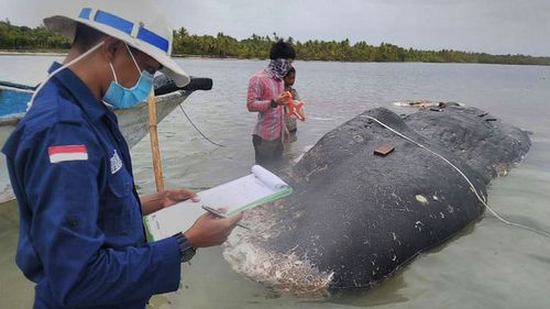 A dead whale filled with plastic has washed up on an Indonesian beach.