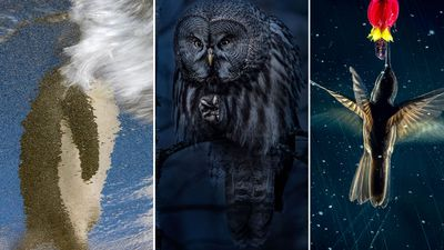 2021 Bird Photographer of the Year