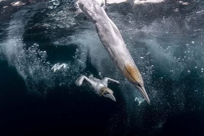2021 Ocean Photography Awards - Second prize