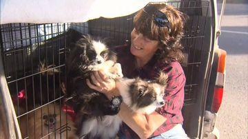 Dog breeder takes RSPCA to court after 19 Pomeranians seized