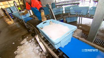 Christmas seafood prices could rise if controversial seismic survey goes ahead