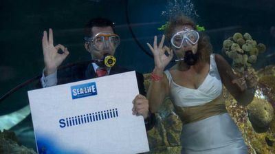 <p>Fran Calvo and Monica Fraile donned formalwear and re-breathers and before they took the plunge by wedding one another underwater at a Spanish aquarium in 2012</p>