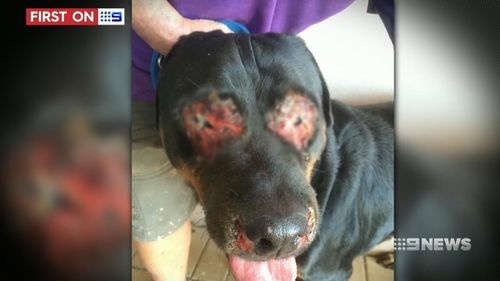 The dog's owner has since been fined $2000 for failing to mitigate harm. (9NEWS)