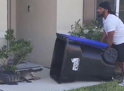 Alligator captured using rubbish bin in Florida