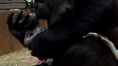 The mother can be seen cleaning, kissing and cradling Moke in the incredible video. (AP)