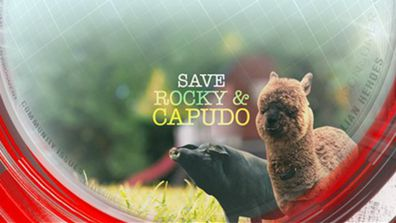 Save Rocky and Capudo