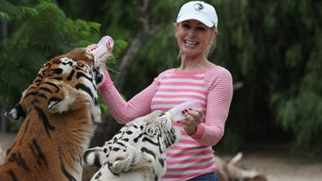 Patty Perry suffered injuries to her head and neck when she got caught between two roughhousing tigers.