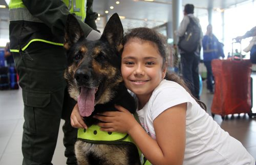 Six-year-old Sombra has helped Colombia's police detect more than 2000kg of cocaine hidden in suitcases, boats and large shipments of fruit. Picture: EPA