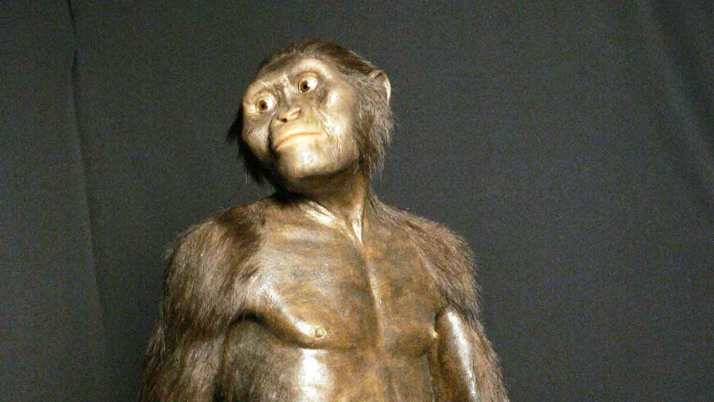 Ancient human ancestor probably lived in trees – 9News