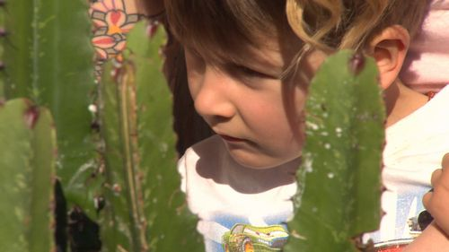 The Mitchell family's autistic son found caring for the cacti a relaxing hobby.